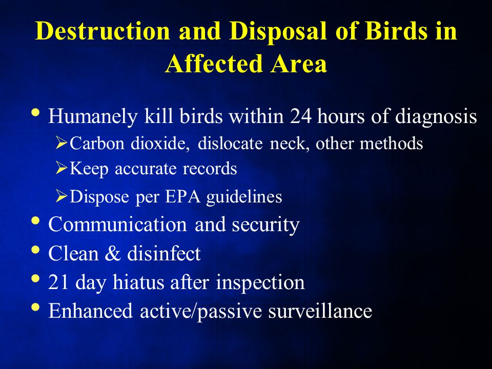 Destruction and Disposal of Birds in Affected Area Humanely kill birds within 24 hours of diagnosis  Carbon dioxide, dislocate neck, other methods  Keep accurate records  Dispose per EPA guidelines Communication and security Clean & disinfect 21 day hiatus after inspection Enhanced active/passive surveillance