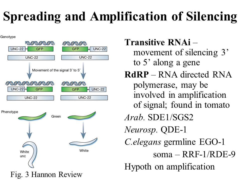 Genetic Studies in C.