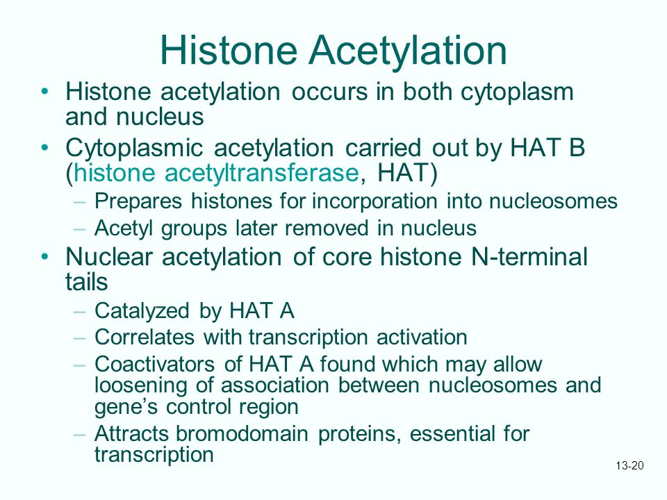 13-20 Histone Acetylation Histone acetylation occurs in both cytoplasm and nucleus Cytoplasmic acetylation carried out by HAT B (histone acetyltransfe