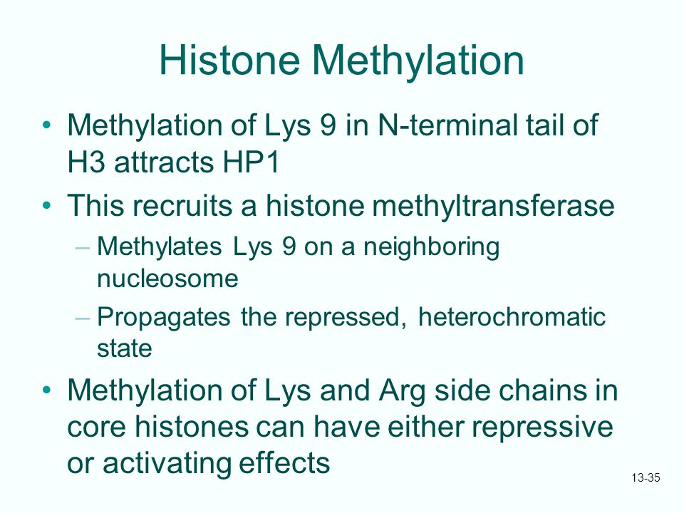 13-35 Histone Methylation Methylation of Lys 9 in N-terminal tail of H3 attracts HP1 This recruits a histone methyltransferase –Methylates Lys 9 on a