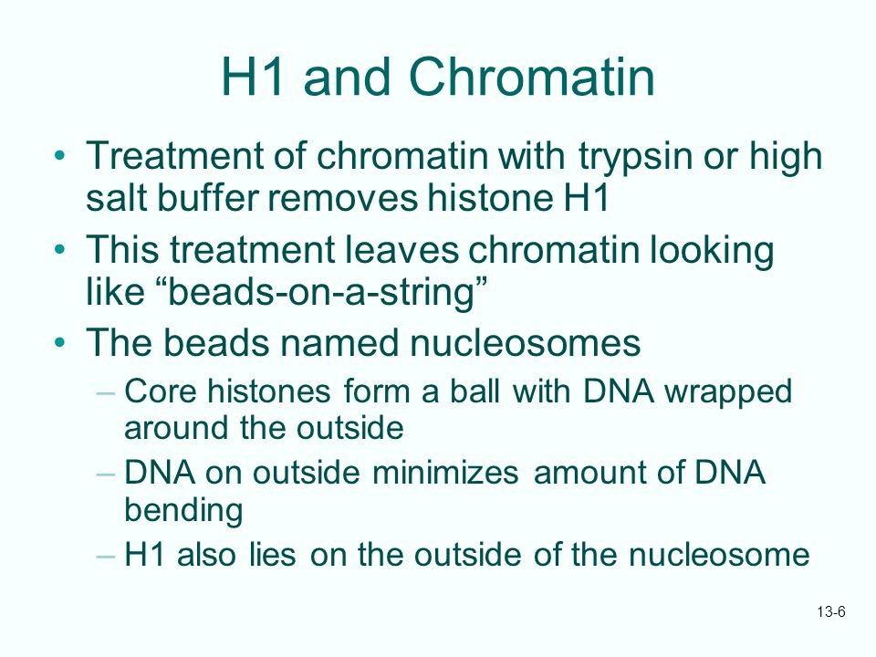 "13-6 H1 and Chromatin Treatment of chromatin with trypsin or high salt buffer removes histone H1 This treatment leaves chromatin looking like ""beads-o"