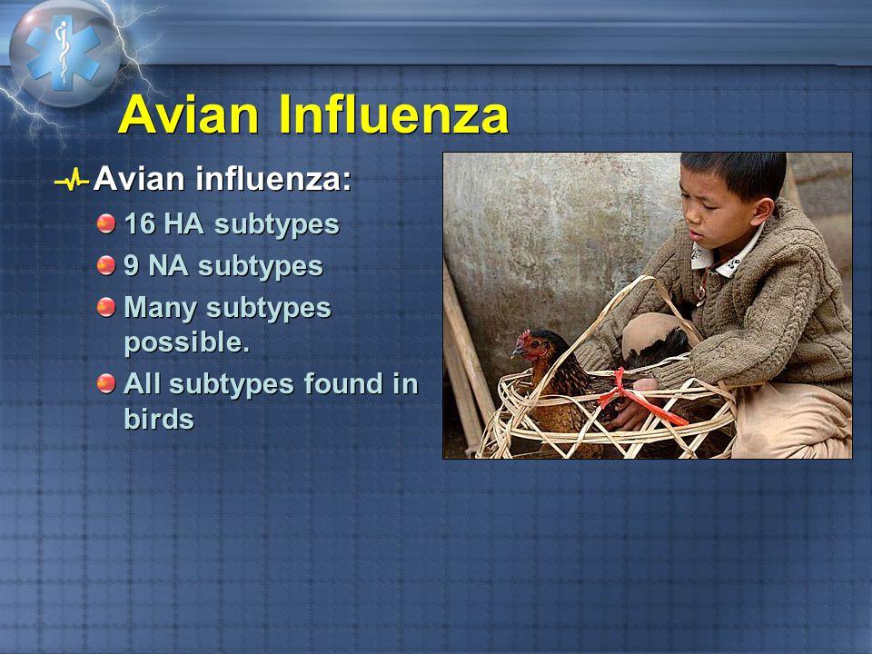 Avian Influenza Avian influenza: 16 HA subtypes 9 NA subtypes Many subtypes possible. All subtypes found in birds Avian influenza: 16 HA subtypes 9 NA