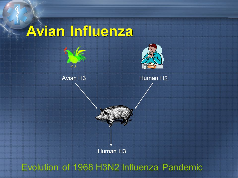 Avian Influenza Clinical features H5N1 Incubation period 2-4 days (maximum of 8) H7 Conjunctivitis H5N2 Children show mild, limited URI symptoms Clinical features H5N1 Incubation period 2-4 days (maximum of 8) H7 Conjunctivitis H5N2 Children show mild, limited URI symptoms
