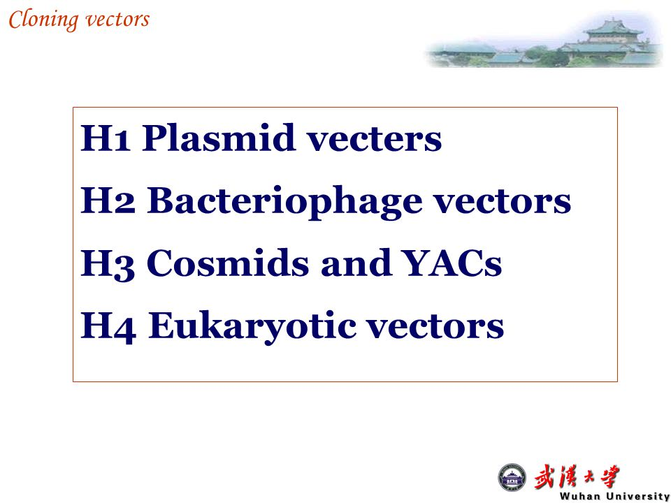 H1-2 A plasmid vector for gene expression Expression vectors: allowing the exogenous DNA to be inserted, stored and expressed.