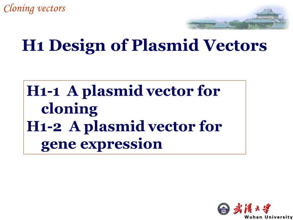 Some cloning vector can be used to transcribe a gene.