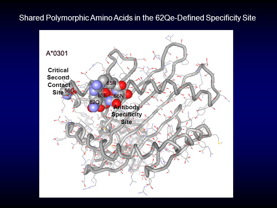 Shared Polymorphic Amino Acids in the 62Qe-Defined Specificity Site Antibody Specificity Site Critical Second Contact Site