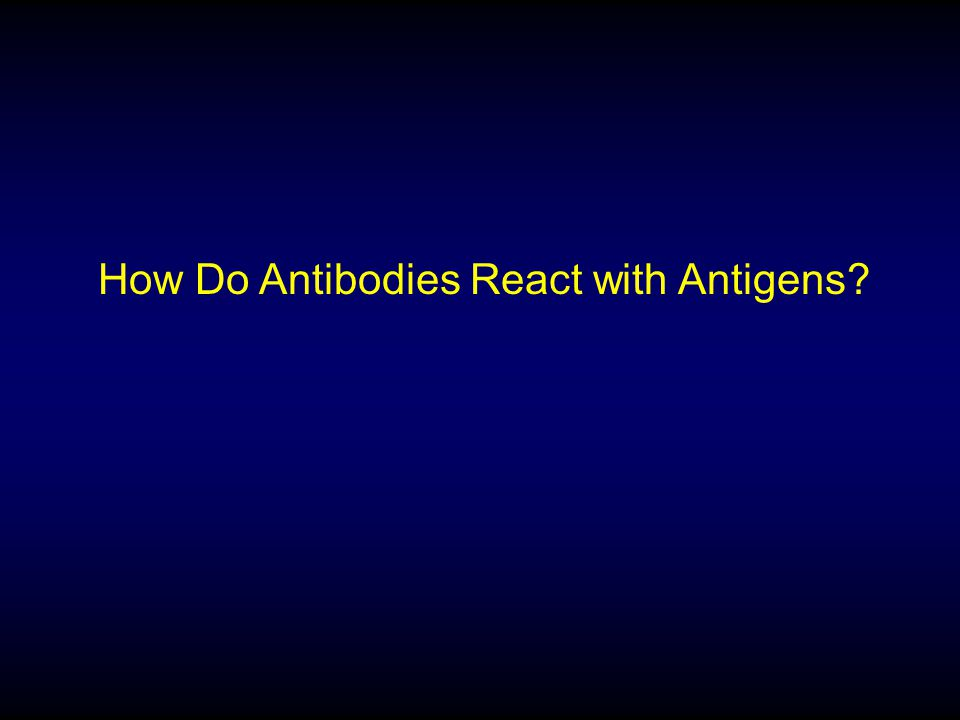 How Do Antibodies React with Antigens?