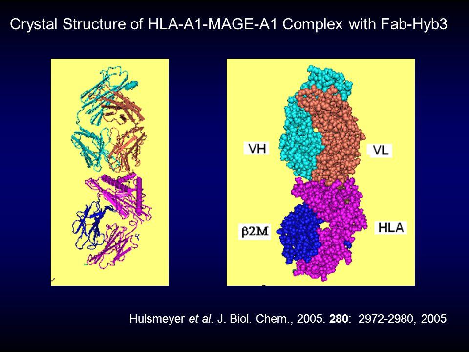 Crystal Structure of HLA-A1-MAGE-A1 Complex with Fab-Hyb3 Hulsmeyer et al. J. Biol. Chem., 2005. 280: 2972-2980, 2005