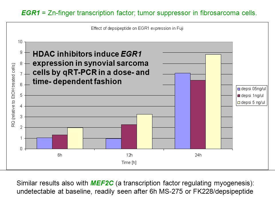 Similar results also with MEF2C (a transcription factor regulating myogenesis): undetectable at baseline, readily seen after 6h MS-275 or FK228/depsip