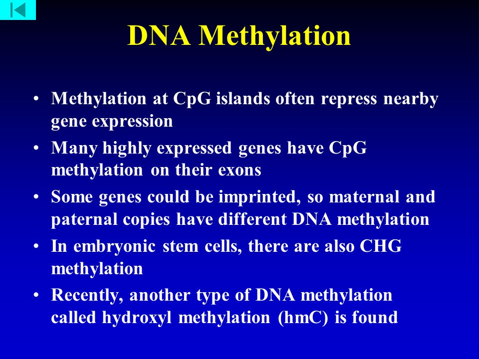 DNA Methylation Methylation at CpG islands often repress nearby gene expression Many highly expressed genes have CpG methylation on their exons Some genes could be imprinted, so maternal and paternal copies have different DNA methylation In embryonic stem cells, there are also CHG methylation Recently, another type of DNA methylation called hydroxyl methylation (hmC) is found