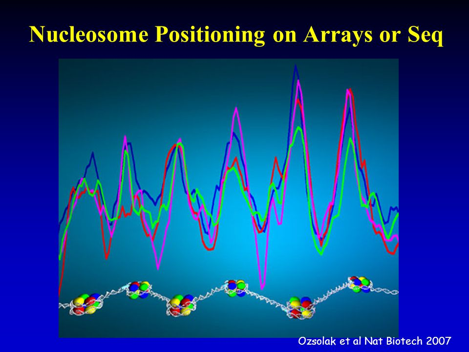 Nucleosome Positioning on Arrays or Seq Ozsolak et al Nat Biotech 2007