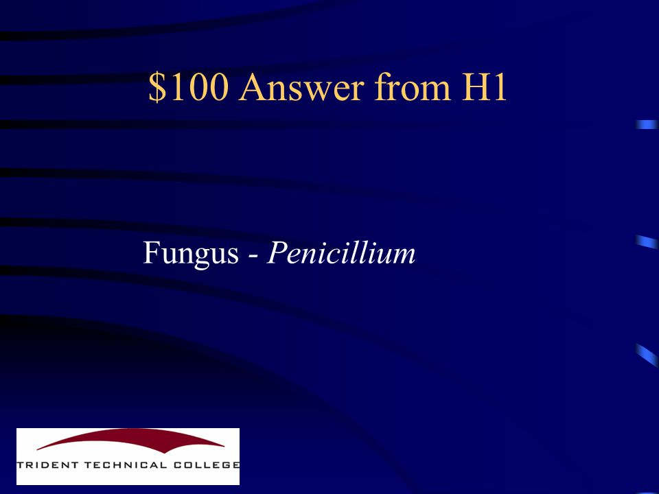 $100 Question from H1 What organism produces penicillin
