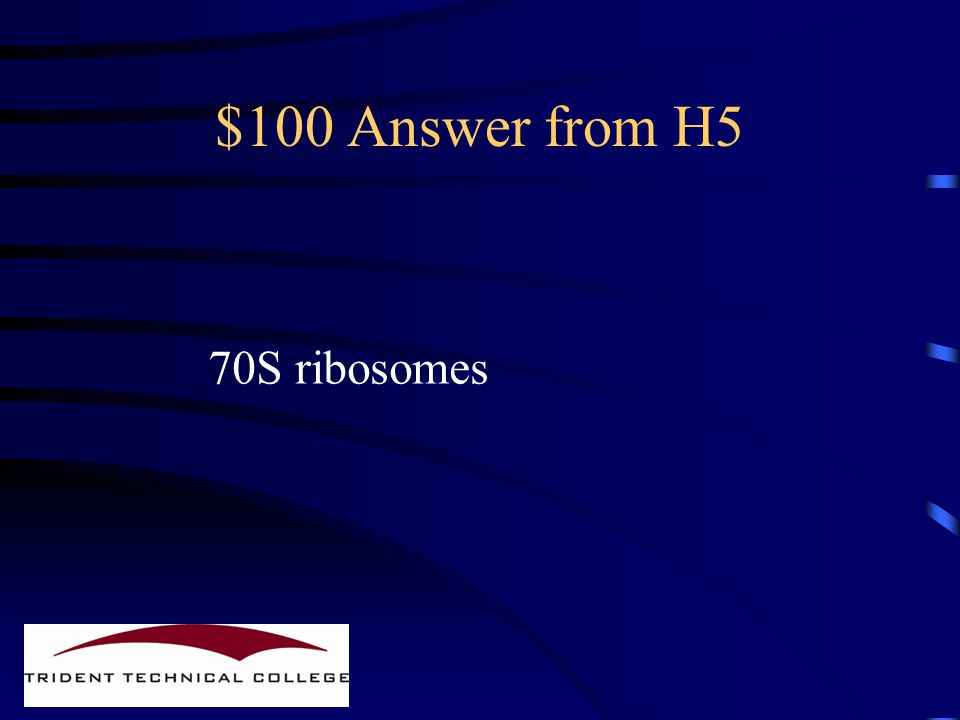 $100 Question from H5 What kind of ribosomes do Prokaryotes contain?