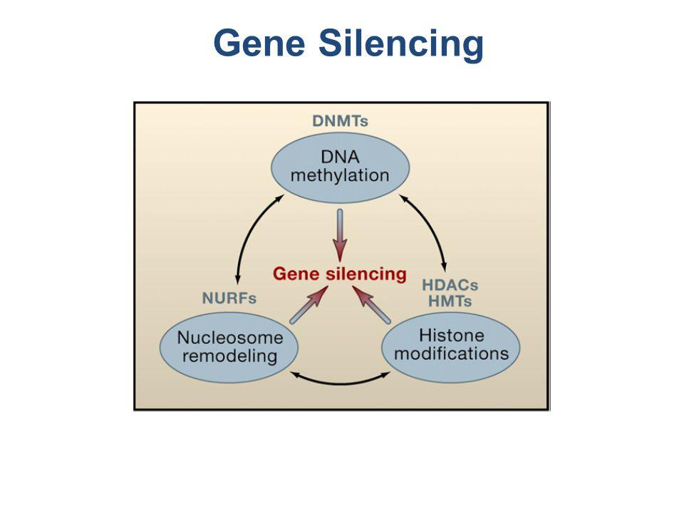 Gene Silencing