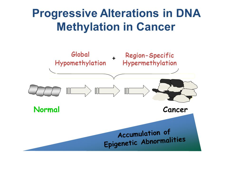 NormalCancer Region-Specific Hypermethylation Accumulation of Epigenetic Abnormalities Global Hypomethylation + Progressive Alterations in DNA Methylation in Cancer