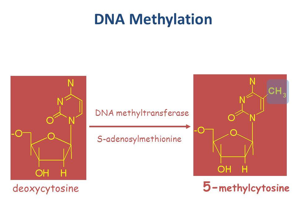 Methylation of Lysines Lysine can be methylated to form mono-methyl, di-methyl and tri-methylarginine.