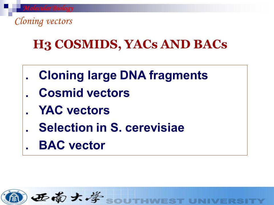 M13 mp18 vector Molecular Biology