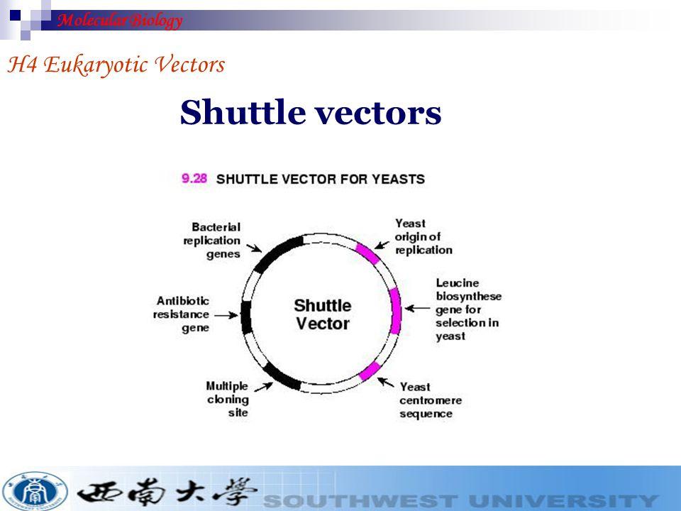 H4 Eukaryotic Vectors 1. Shuttle vectors 2. Yeast episomal plasmids (Yeasts) 3. Agrobacterium tumefaciens Ti plasmid (Plants) 4. Baculovirus (Insects)