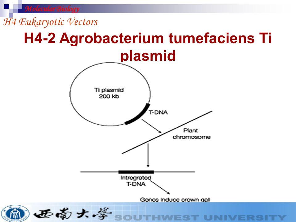 Replicate as plasmid from 2m origin integrate by recombinantion YEp vector H4 Eukaryotic Vectors Molecular Biology