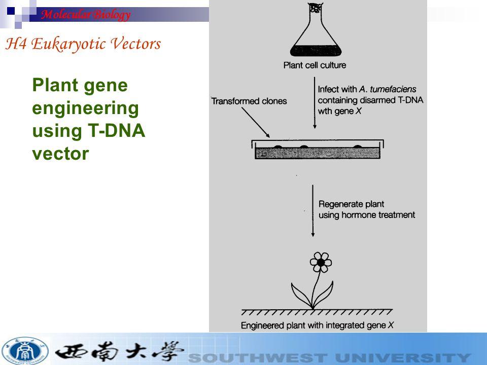 crown gall or tumor H4 Eukaryotic Vectors Molecular Biology