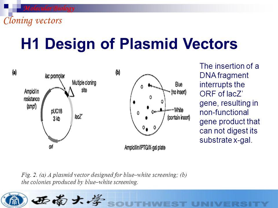 H1 Design of Plasmid Vectors Cloning vectors Fig. 1. (a) Screening by insertional inactivation of a resistance gene; (b) replica plating. Molecular Bi