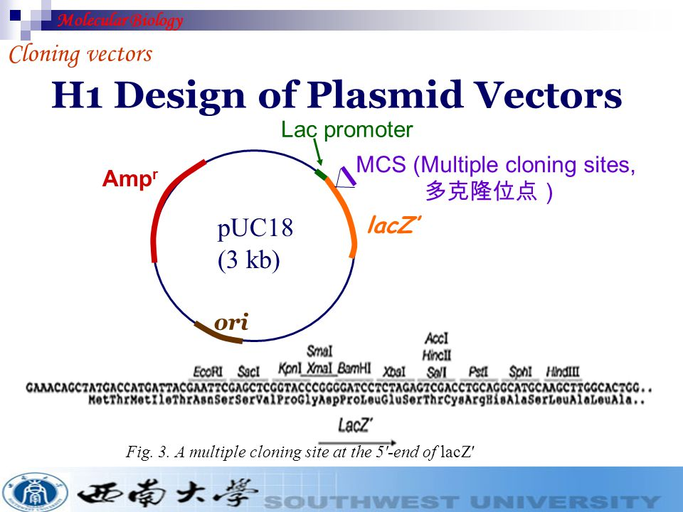 H1 Design of Plasmid Vectors Cloning vectors Fig. 2. (a) A plasmid vector designed for blue–white screening; (b) the colonies produced by blue–white s