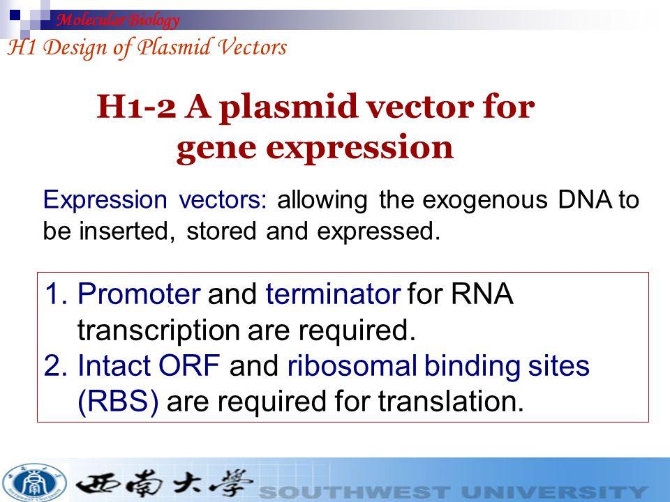 H1 Design of Plasmid Vectors Cloning vectors Fig. 3. A multiple cloning site at the 5′-end of lacZ′ Amp r ori pUC18 (3 kb) MCS (Multiple cloning sites