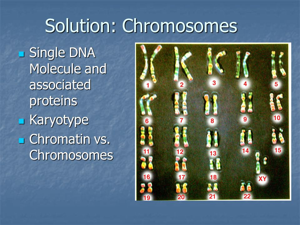 Solution: Chromosomes Single DNA Molecule and associated proteins Single DNA Molecule and associated proteins Karyotype Karyotype Chromatin vs.