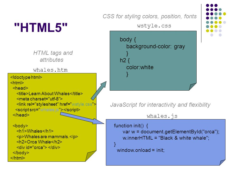 HTML5 Learn About Whales Whales Whales are mammals.