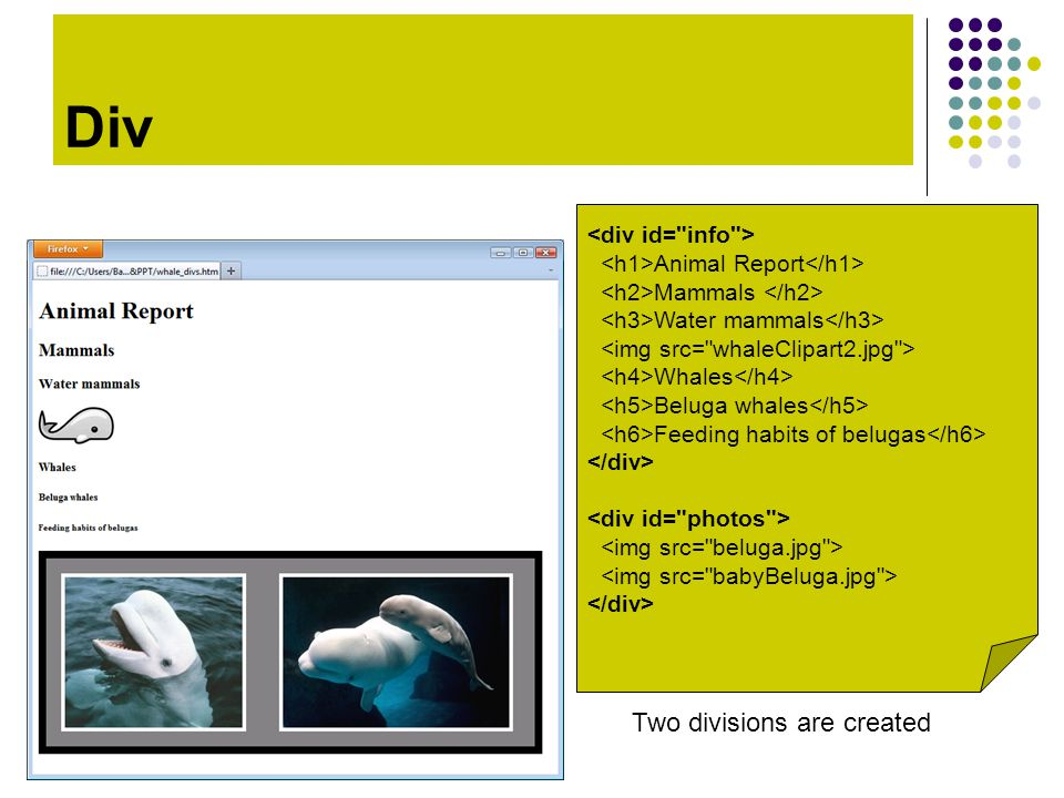 Div Animal Report Mammals Water mammals Whales Beluga whales Feeding habits of belugas Two divisions are created