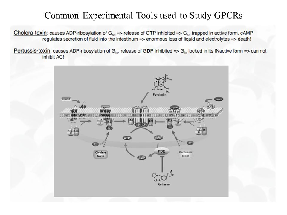Common Experimental Tools used to Study GPCRs