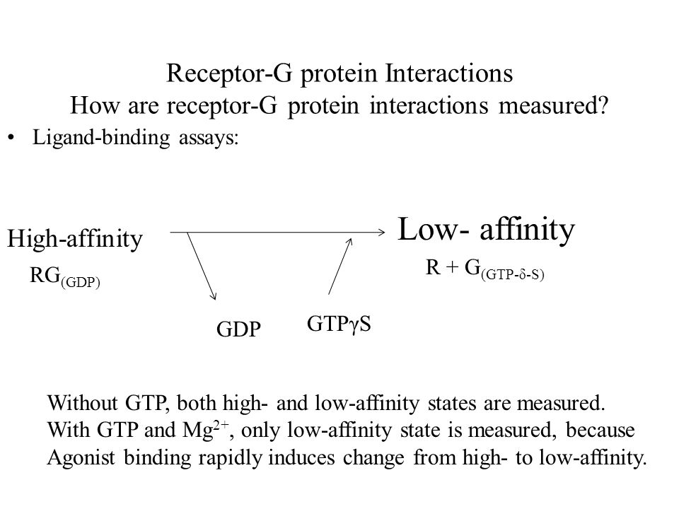 Receptor-G protein Interactions How are receptor-G protein interactions measured.