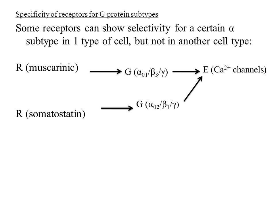 Specificity of receptors for G protein subtypes Some receptors can show selectivity for a certain α subtype in 1 type of cell, but not in another cell type: R (muscarinic) R (somatostatin) G (α 01 /β 3 /γ) E (Ca 2+ channels) G (α 02 /β 1 /γ )