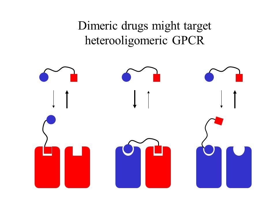 Dimeric drugs might target heterooligomeric GPCR