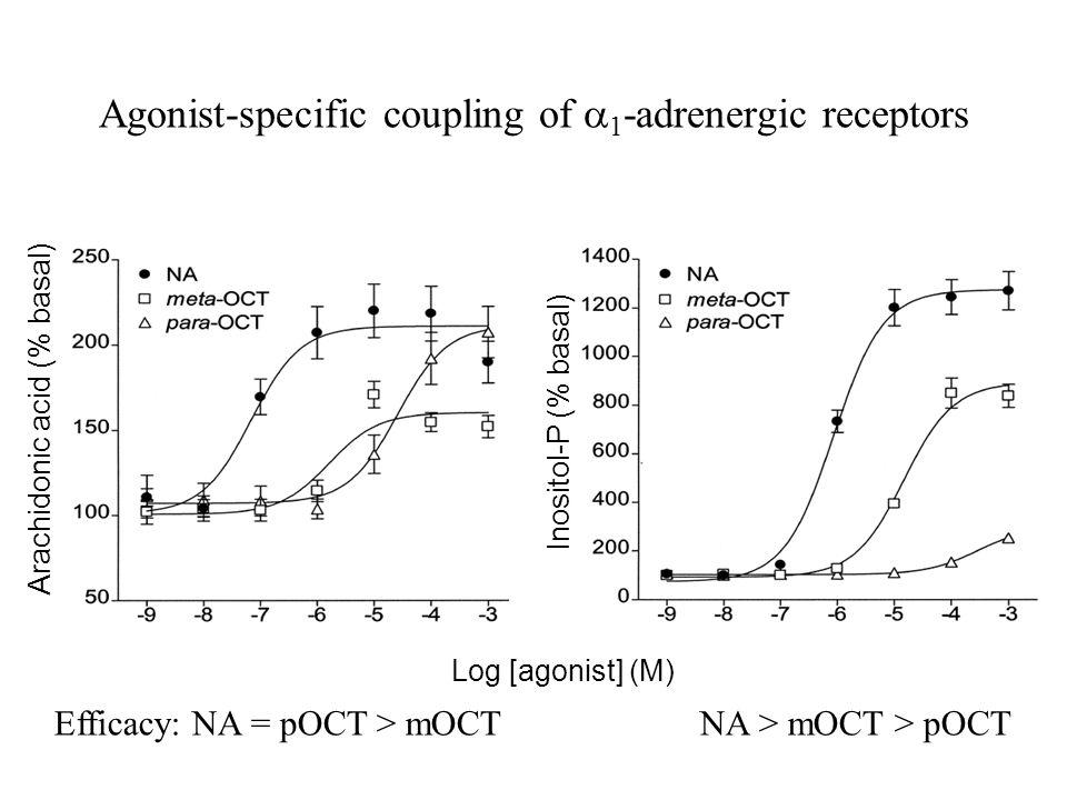Agonist-specific coupling of  1 -adrenergic receptors Arachidonic acid (% basal) Inositol-P (% basal) Log [agonist] (M) Efficacy: NA = pOCT > mOCTNA > mOCT > pOCT