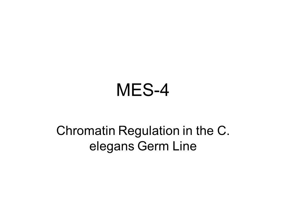 MES-4 Chromatin Regulation in the C. elegans Germ Line