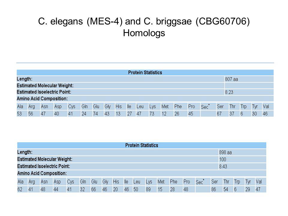 C. elegans (MES-4) and C. briggsae (CBG60706) Homologs