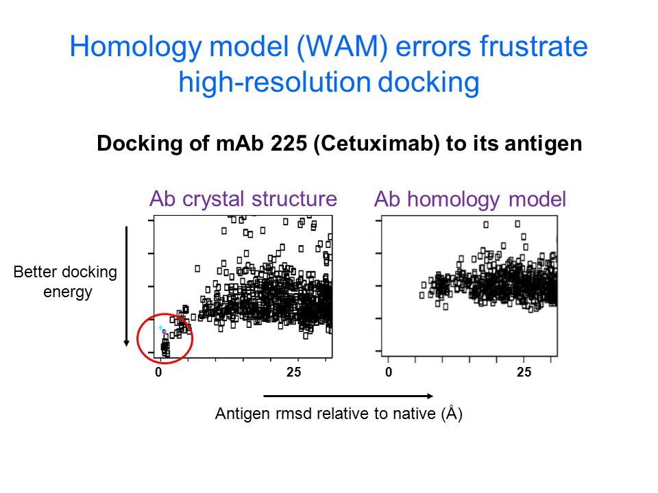 Homology model (WAM) errors frustrate high-resolution docking Antigen rmsd relative to native (Å) Better docking energy 0 25 0 Ab crystal structure Ab homology model Docking of mAb 225 (Cetuximab) to its antigen