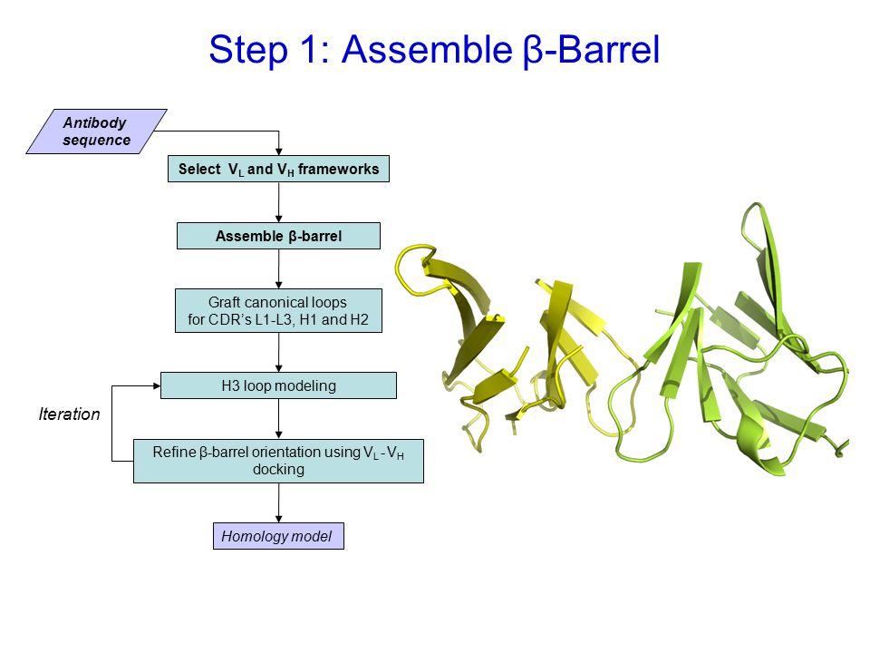 Step 1: Assemble β-Barrel Select V L and V H frameworks Assemble β-barrel Graft canonical loops for CDR's L1-L3, H1 and H2 Antibody sequence H3 loop modeling Homology model Refine β-barrel orientation using V L - V H docking Iteration