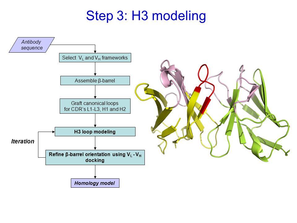 Step 3: H3 modeling Select V L and V H frameworks Assemble β-barrel Graft canonical loops for CDR's L1-L3, H1 and H2 Antibody sequence H3 loop modeling Homology model Refine β-barrel orientation using V L - V H docking Iteration