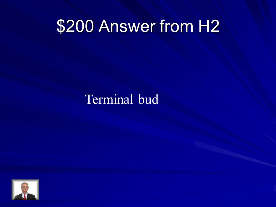 $200 Answer from H2 Terminal bud