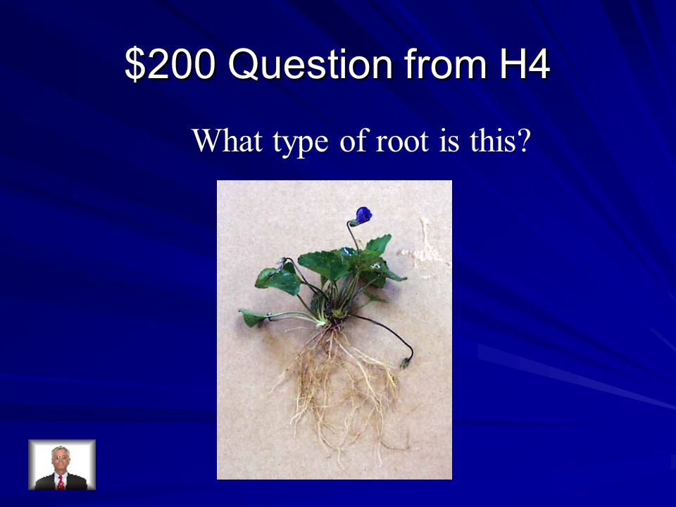 $200 Question from H4 What type of root is this