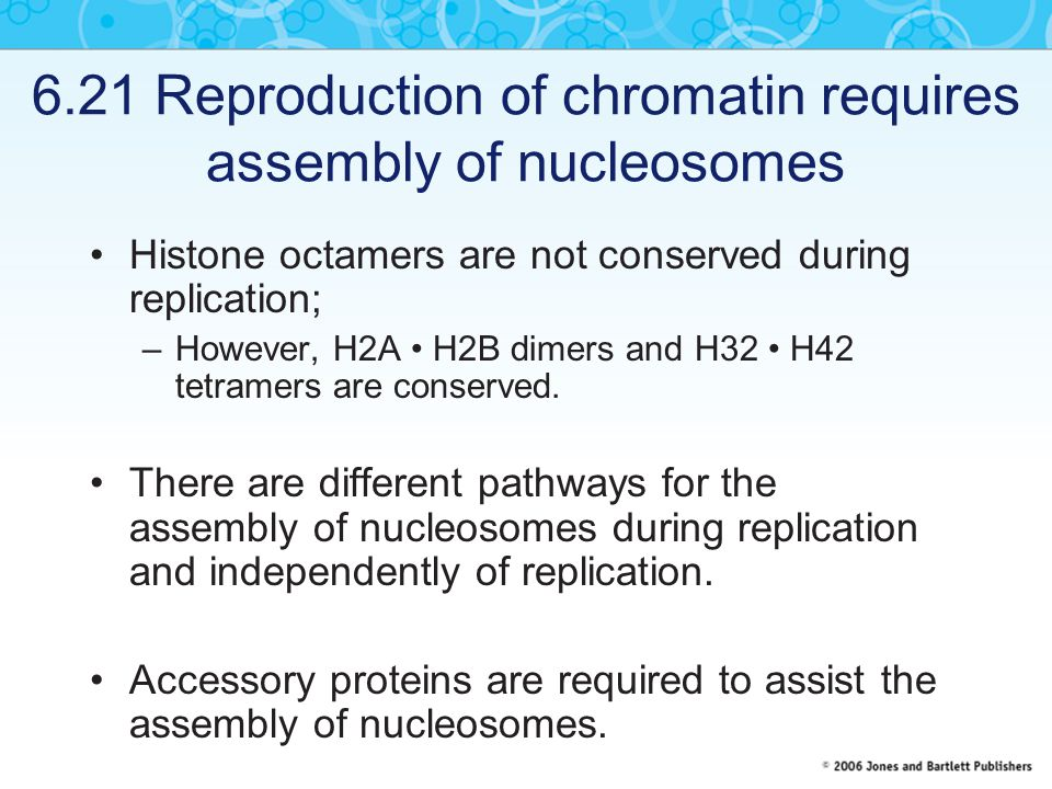 6.21 Reproduction of chromatin requires assembly of nucleosomes Histone octamers are not conserved during replication; –However, H2A H2B dimers and H32 H42 tetramers are conserved.