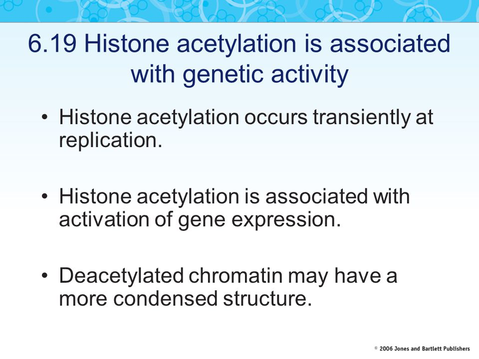 6.19 Histone acetylation is associated with genetic activity Histone acetylation occurs transiently at replication.
