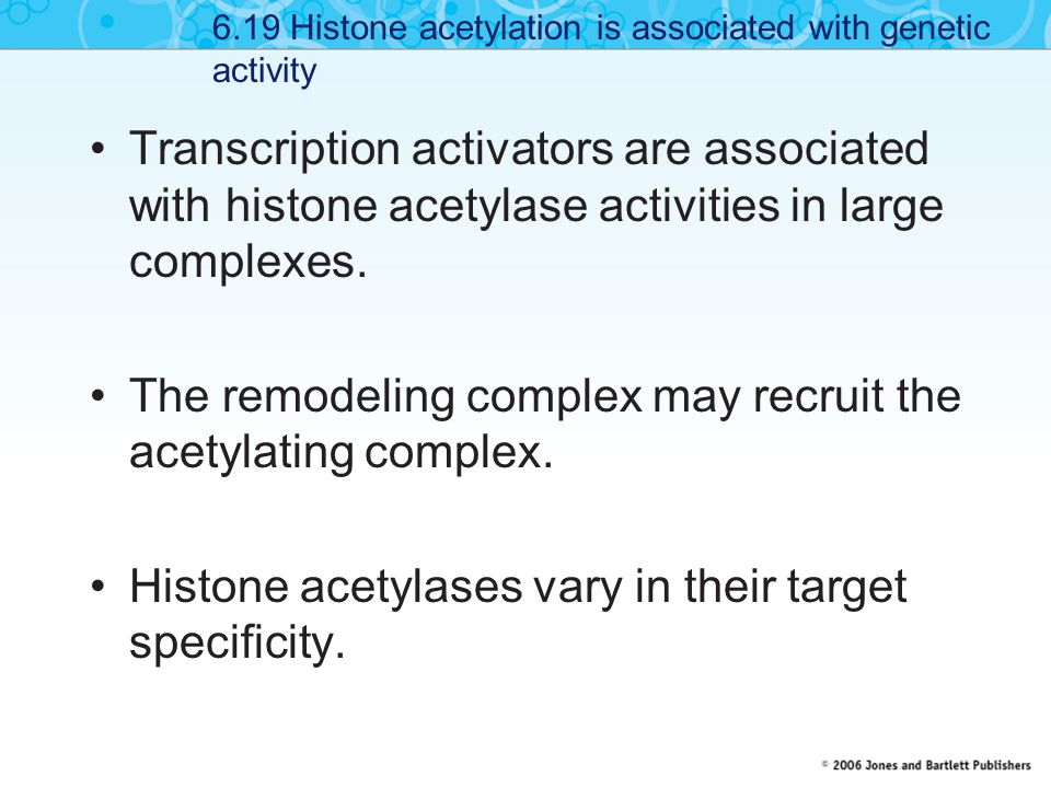 Transcription activators are associated with histone acetylase activities in large complexes.