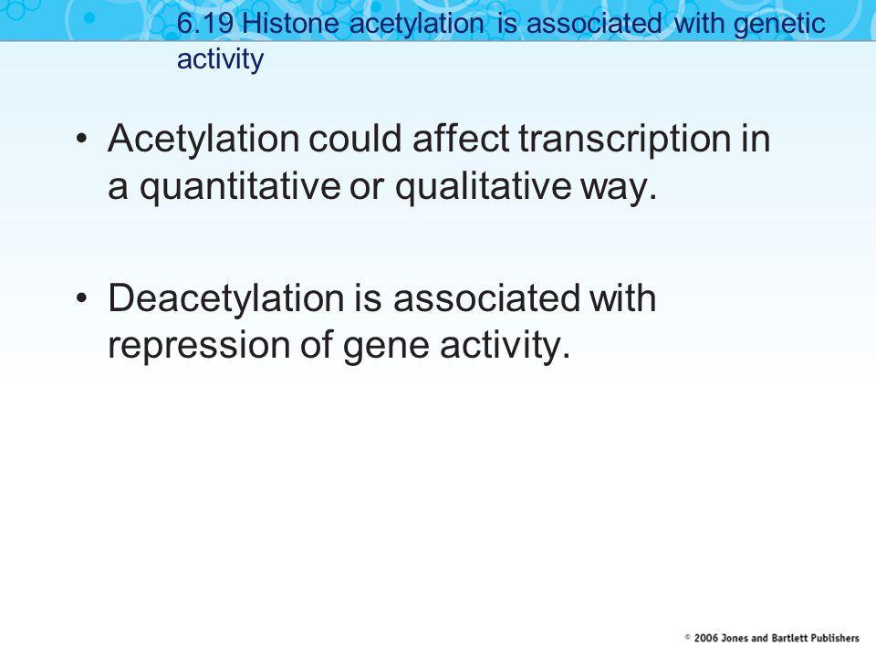 Acetylation could affect transcription in a quantitative or qualitative way.