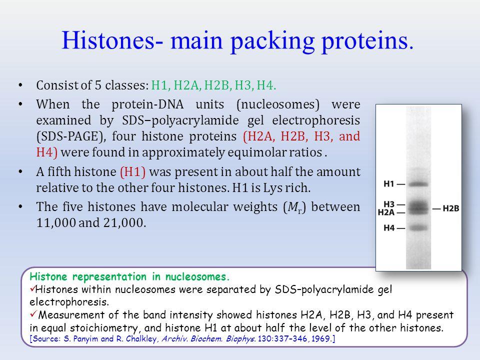 Histone representation in nucleosomes.