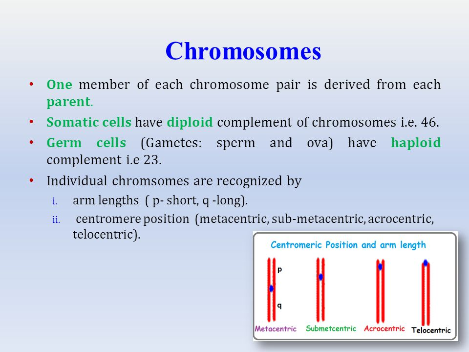 Chromosomes One member of each chromosome pair is derived from each parent.