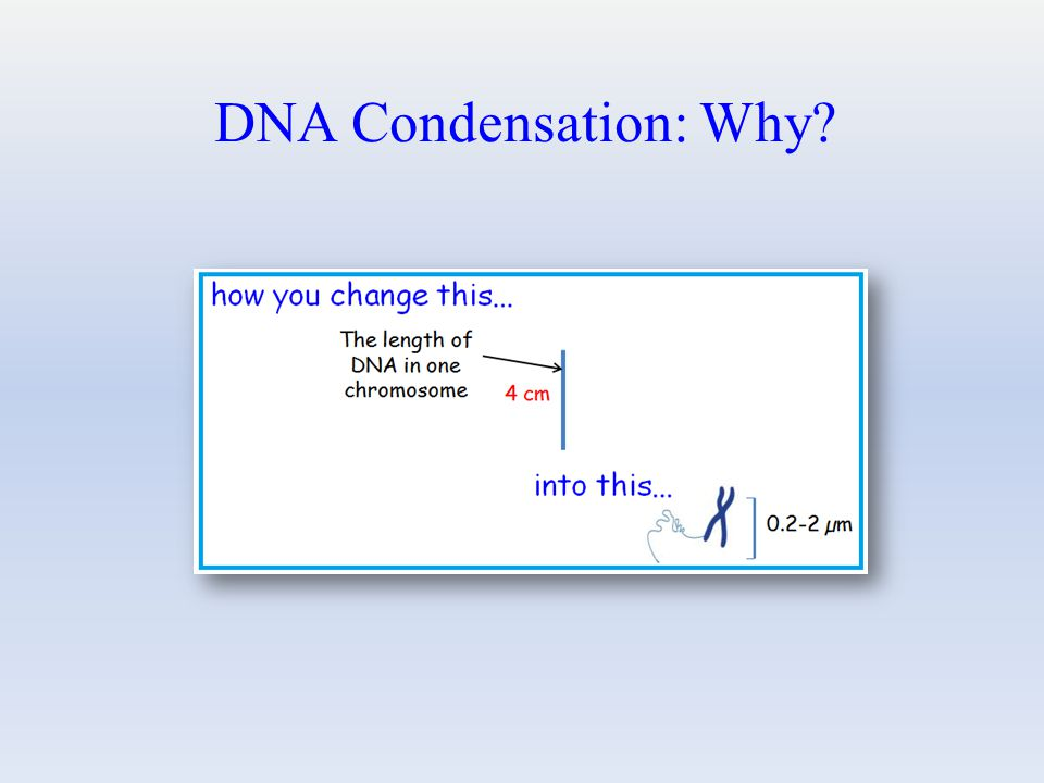 DNA Condensation: Why?