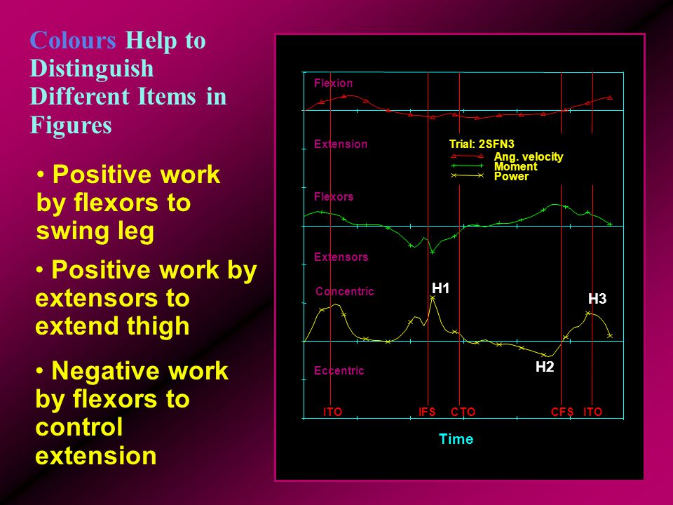 Including Text Focuses Your Audience Positive work by flexors to swing leg Positive work by extensors to extend thigh Negative work by flexors to cont